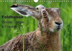Feldhasen – Meister Lampe in Franken (Wandkalender 2019 DIN A4 quer) von Bachmeier,  Günter