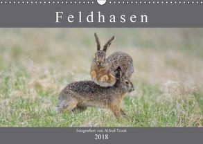 Feldhasen (Wandkalender 2018 DIN A3 quer) von Trunk,  Alfred
