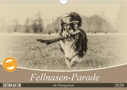 Fellnasen-Parade im Vintagelook (Wandkalender 2020 DIN A4 quer) von Teßen,  Sonja