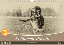 Fellnasen-Parade im Vintagelook (Wandkalender 2021 DIN A4 quer) von Teßen,  Sonja