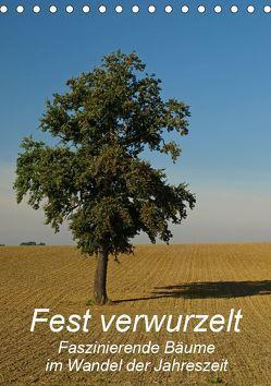 Fest verwurzelt – Faszinierende Bäume im Wandel der Jahreszeit (Tischkalender 2019 DIN A5 hoch) von Brigitte Deus-Neumann,  Dr.