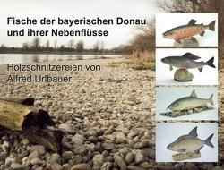 Fische der bayerischen Donau und ihrer Nebenflüsse von Urlbauer,  Alfred