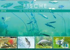 Fische in Teichen und Flüssen (Wandkalender 2019 DIN A2 quer) von CALVENDO