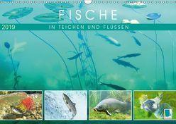 Fische in Teichen und Flüssen (Wandkalender 2019 DIN A3 quer) von CALVENDO