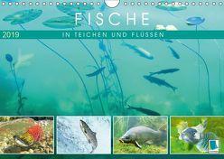 Fische in Teichen und Flüssen (Wandkalender 2019 DIN A4 quer) von CALVENDO