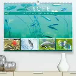 Fische in Teichen und Flüssen (Premium, hochwertiger DIN A2 Wandkalender 2020, Kunstdruck in Hochglanz) von CALVENDO