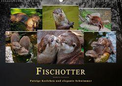 Fischotter – putzige Kerlchen und elegante Schwimmer (Wandkalender 2019 DIN A2 quer) von Roder,  Peter