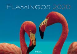 Flamingos 2020