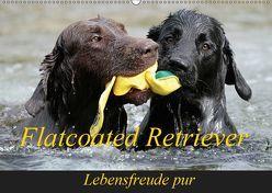 Flatcoated Retriever (Wandkalender 2019 DIN A2 quer) von / Beatrice Müller,  BeaM