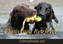 Flatcoated Retriever (Wandkalender 2019 DIN A4 quer) von / Beatrice Müller,  BeaM