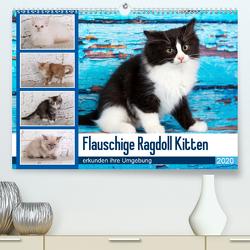 Flauschige Ragdoll Kitten (Premium, hochwertiger DIN A2 Wandkalender 2020, Kunstdruck in Hochglanz) von Verena Scholze,  Fotodesign