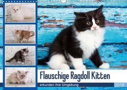 Flauschige Ragdoll Kitten (Wandkalender 2018 DIN A3 quer) von Verena Scholze,  Fotodesign