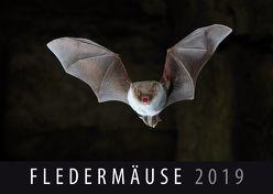 Fledermäuse 2019 von Quelle & Meyer Verlag