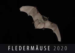 Fledermäuse 2020 von Quelle & Meyer Verlag