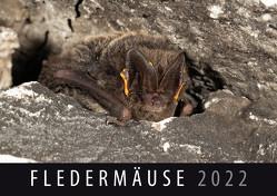 Fledermäuse 2022 von Quelle & Meyer Verlag