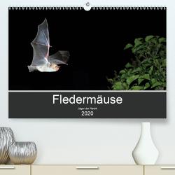 Fledermäuse – Jäger der Nacht (Premium, hochwertiger DIN A2 Wandkalender 2020, Kunstdruck in Hochglanz) von Schäfer,  Otto