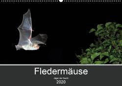Fledermäuse – Jäger der Nacht (Wandkalender 2020 DIN A2 quer) von Schäfer,  Otto