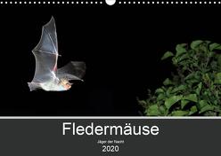 Fledermäuse – Jäger der Nacht (Wandkalender 2020 DIN A3 quer) von Schäfer,  Otto