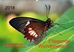 Fliegende Wunderwesen. Schmetterlinge weltweit, ganz nah (Wandkalender 2018 DIN A2 quer) von Zeidler,  Thomas