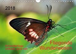 Fliegende Wunderwesen. Schmetterlinge weltweit, ganz nah (Wandkalender 2018 DIN A4 quer) von Zeidler,  Thomas