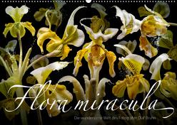 Flora miracula – Die wundersame Welt des Fotografen Olaf Bruhn (Wandkalender 2019 DIN A2 quer) von Bruhn,  Olaf