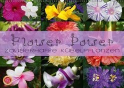 Flower Power – Zauberhafte Kübelpflanzen (Wandkalender 2019 DIN A2 quer) von Cross,  Martina