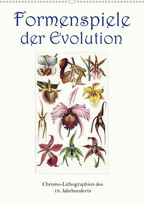 Formenspiele der Evolution. Chromolithographien des 19. Jahrhunderts (Wandkalender 2020 DIN A2 hoch) von Galle,  Jost