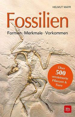Fossilien von Mayr,  Helmut
