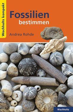 Fossilien bestimmen KOMPAKT von Rohde,  Andrea