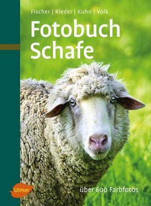 Fotobuch Schafe von Fischer,  Dr. Gerhard, Fridhelm und Renate Volk,  Fridhelm, Rieder,  Hugo
