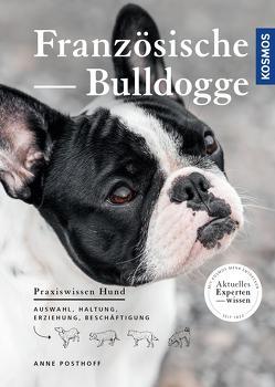 Französische Bulldogge von Posthoff,  Anne