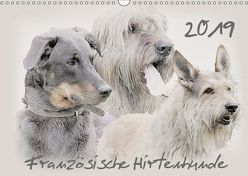 Französische Hirtenhunde 2019 (Wandkalender 2019 DIN A3 quer) von Redecker,  Andrea