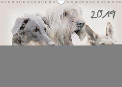 Französische Hirtenhunde 2019 (Wandkalender 2019 DIN A4 quer) von Redecker,  Andrea