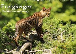 Freigänger – Hauskatzen unterwegs (Wandkalender 2019 DIN A2 quer) von Schmäing,  Werner