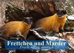 Frettchen und Marder. Frech, witzig, niedlich (Wandkalender 2019 DIN A2 quer) von Stanzer,  Elisabeth