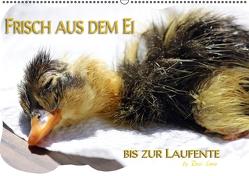 Frisch aus dem Ei bis zur Laufente (PosterbuchDIN A4 quer) von LoRo-Artwork,  k.A.