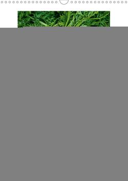 Frische Küche (Wandkalender 2021 DIN A3 hoch) von Veronesi,  Larissa