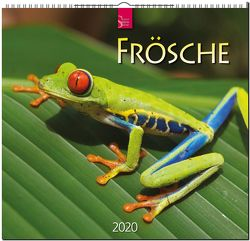 Frösche von Redaktion Verlagshaus Würzburg,  Bildagentur