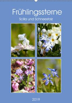 Frühlingssterne Scilla und Schneestolz (Wandkalender 2019 DIN A2 hoch) von Kruse,  Gisela