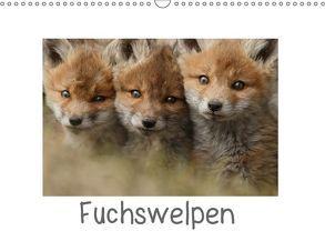 Fuchswelpen (Wandkalender 2018 DIN A3 quer) von Marklein,  Gabi