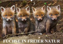 Füchse in freier Natur (Wandkalender 2021 DIN A2 quer) von Ulrich Hopp,  Dr.