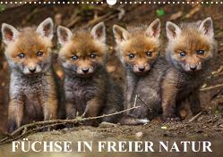 Füchse in freier Natur (Wandkalender 2021 DIN A3 quer) von Ulrich Hopp,  Dr.