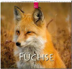 Füchse von Redaktion Verlagshaus Würzburg,  Bildagentur