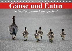 Gänse und Enten. Schnattern, watscheln, quaken! (Tischkalender 2019 DIN A5 quer) von Stanzer,  Elisabeth