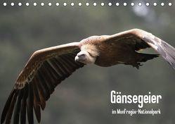 Gänsegeier im Monfragüe-Nationalpark (Tischkalender 2019 DIN A5 quer) von Schneeberger,  Daniel