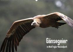 Gänsegeier im Monfragüe-Nationalpark (Wandkalender 2019 DIN A2 quer) von Schneeberger,  Daniel