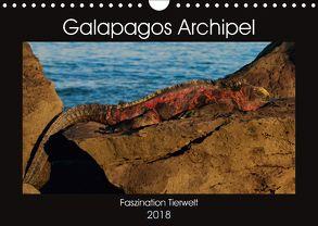 Galapagos Archipel- Faszination Tierwelt (Wandkalender 2018 DIN A4 quer) von Photo4emotion.com