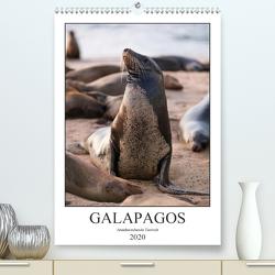 Galapagos – Atemberaubende Tierwelt (Premium, hochwertiger DIN A2 Wandkalender 2020, Kunstdruck in Hochglanz) von Dobrindt,  Jeanette