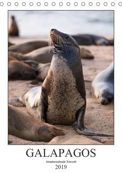 Galapagos – Atemberaubende Tierwelt (Tischkalender 2019 DIN A5 hoch) von Dobrindt,  Jeanette