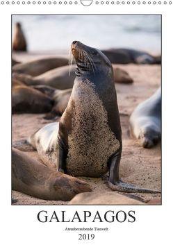 Galapagos – Atemberaubende Tierwelt (Wandkalender 2019 DIN A3 hoch) von Dobrindt,  Jeanette